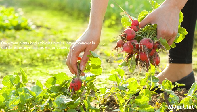 Pleasant Weather for Gardening Healthy Homegrown Harvesting